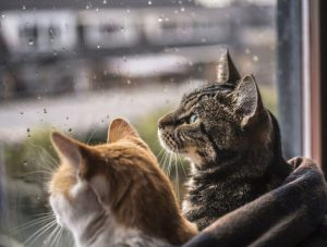 felicity-berkleef-cat-window-photography-8jpg